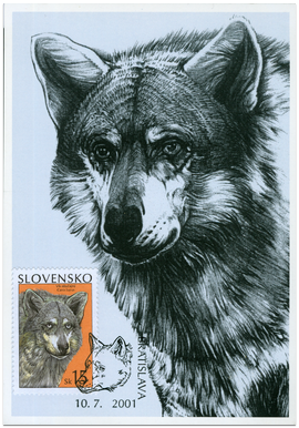 Ochrana prírody - Vlk