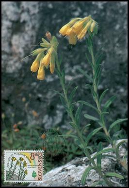 European Nature Conservation Year - Onosoma tornense