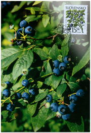Nature Conservation - Forest fruits - Bilberry