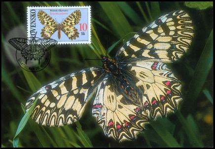Ochrana prírody - Motýle: Pestroň vlkovcový