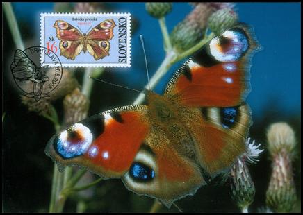 Ochrana prírody - Motýle: Babôčka pávooká