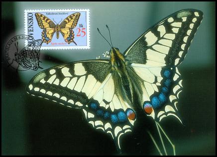 Ochrana prírody - Motýle: Vidlochvost feniklový