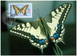 Buterfflies - Old World Swallowtail