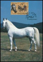 Horses - The Lippizaner Horse