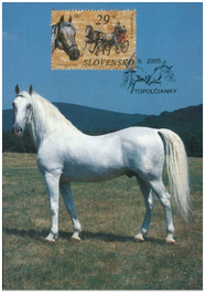 Kone - Lipicanský kôň