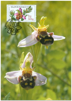 Nature Conservation – Orchids, Bee Orchid