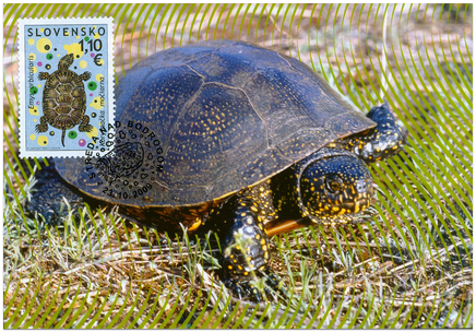 Nature Protection - European pond terrapin