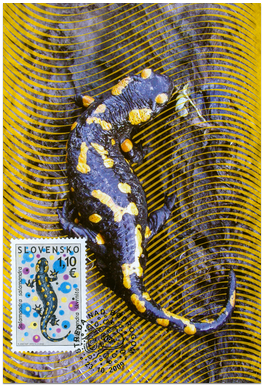 Preservation of Nature - Fire Salamander