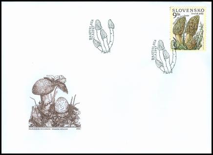Ochrana prírody - Smrčok jedlý (Morchella esculanta)