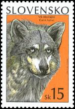 Ochrana prírody - Vlk obyčajný