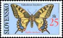 Motýle - Vidlochvost fenyklový