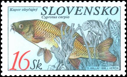 Ochrana prírody - Ryby - Kapor obyčajný