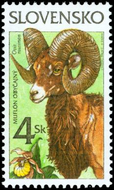 Nature Conservation - Mouflon (Ovis musimon)