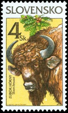 Nature Conservation - European Bison (Bison bonasus)