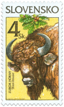 Nature Conservation - European Bison (Bison bonasus)