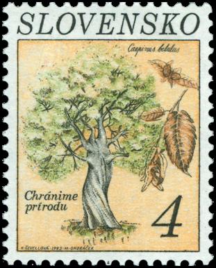 Hrab obyčajný (Carpinus betulus)