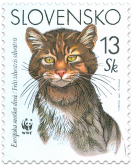 European Wild Cat (WWF)