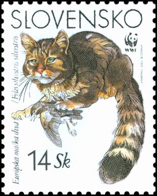 European Wild Cat (WWF)