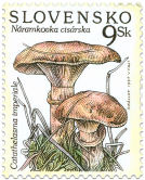Mushrooms - Catathelasma imperiale