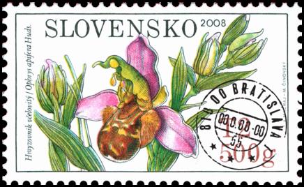 Ochrana prírody - Orchidey: Hmyzovník včelovitý