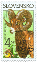 Nature Conservation - Mouflon (Ovis musimon)