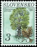 Dub letný (Quercus robur)