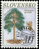 Borovica sosna (Pinus silvestris)