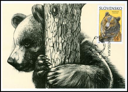 Ochrana prírody - Medveď hnedý