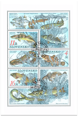 Ochrana prírody - Ryby