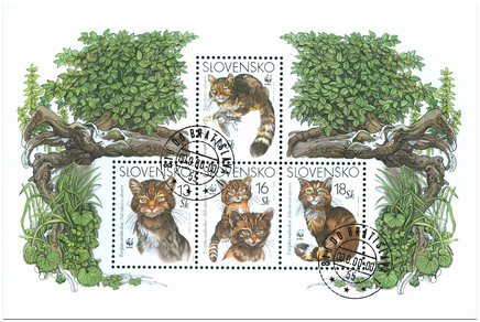 Európska mačka divá (WWF)