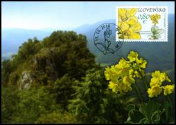 Ochrana prírody: Muránska planina - Prvosienka holá