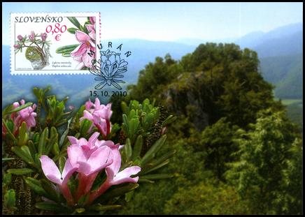 Nature Protection: Muránska Plain - Daphne Arbuscula