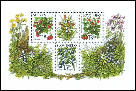 Lesné plody - Brusnica čučoriedková (čučoriedka)