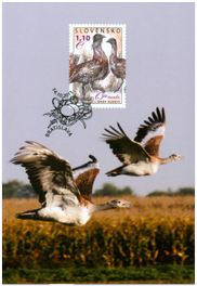 Nature Conservation: Great Bustard
