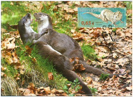 Ochrana prírody: Chránená krajinná oblasť Poľana – Vydra riečna