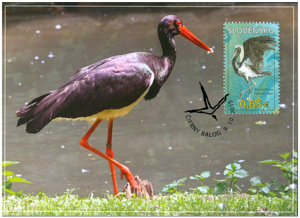 Nature Protection: Protected Landscape Area Poľana – Black Stork