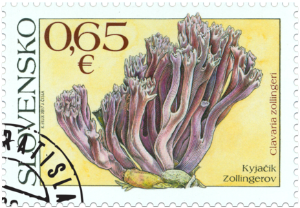 Ochrana prírody: kyjačik Zollingerov (Clavaria zollingeri)