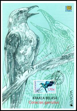 EUROPA 2019: Vzácne vtáky - krakľa belasá