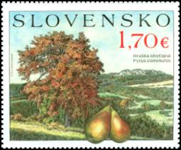 Ochrana prírody: Ovocné stromy - hruška obyčajná