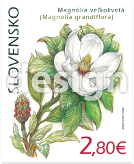 Nature Protection: the Botanical Garden in Košice – Magnolia Grandiflora