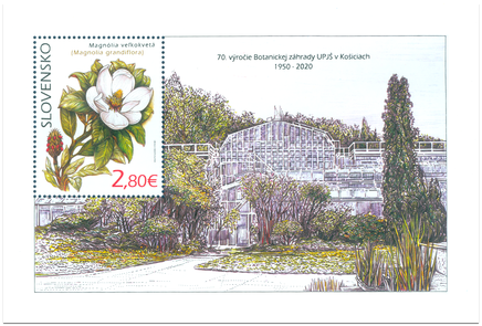 Ochrana prírody: Botanická záhrada UPJŠ v Košiciach – magnólia veľkokvetá