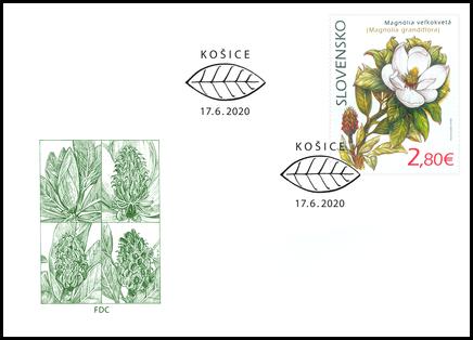 Nature Protection: the Botanical Garden in Košice – Magnolia Grandiflora