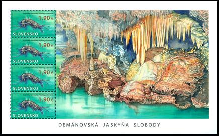 Ochrana prírody: Demänovská jaskyňa slobody - Studničkár tatranský
